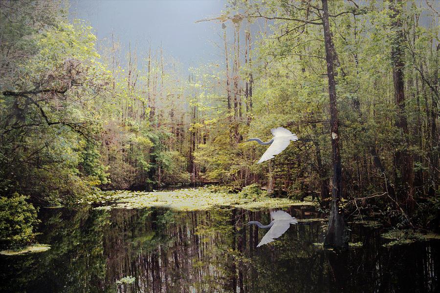 Cypress Swamp Digital Art - Charlie Bowlegs Creek by Richard Nickson
