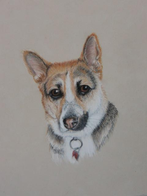 Dog Painting - Charlie- Commission by Sheila Banga