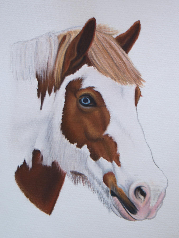 Horse Pastel - Charlie by Lucy Deane