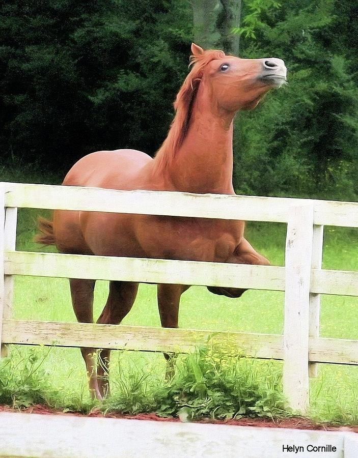 Equine Photograph - Charpege by Helyn Broadhurst Cornille