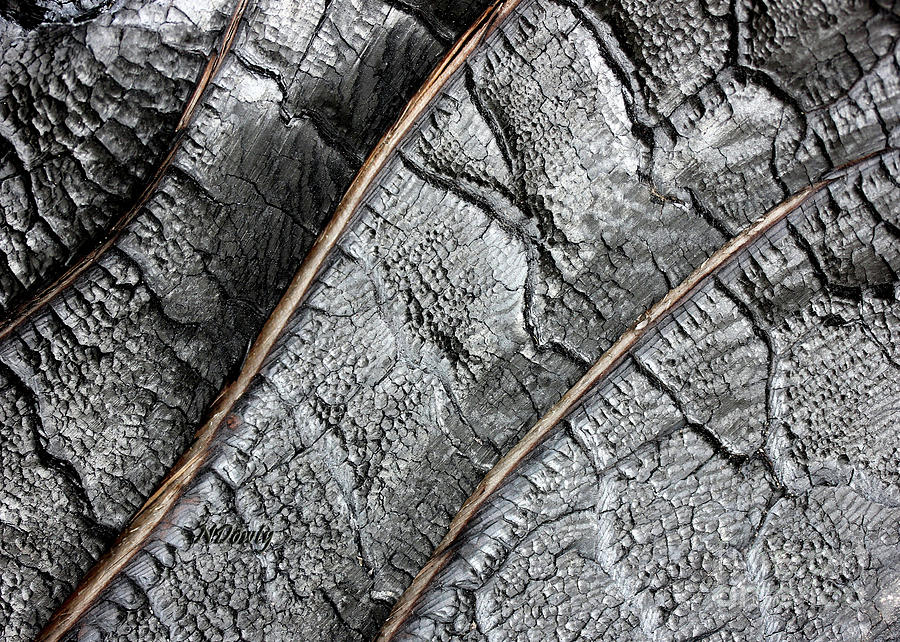 Charred Pine Bark by Natalie Dowty
