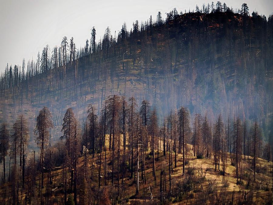 Yosemite Photograph - Charred by Scott Fracasso