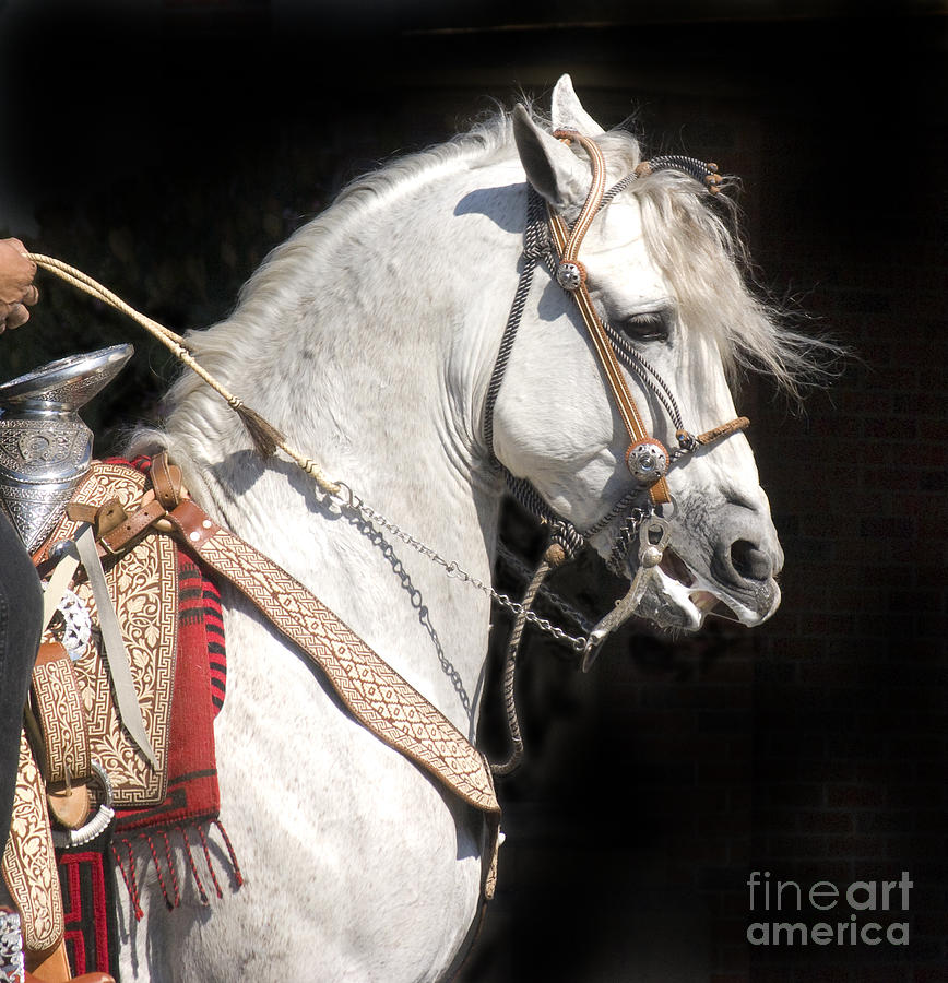Charro Photograph - Charro Stallion by Jim And Emily Bush