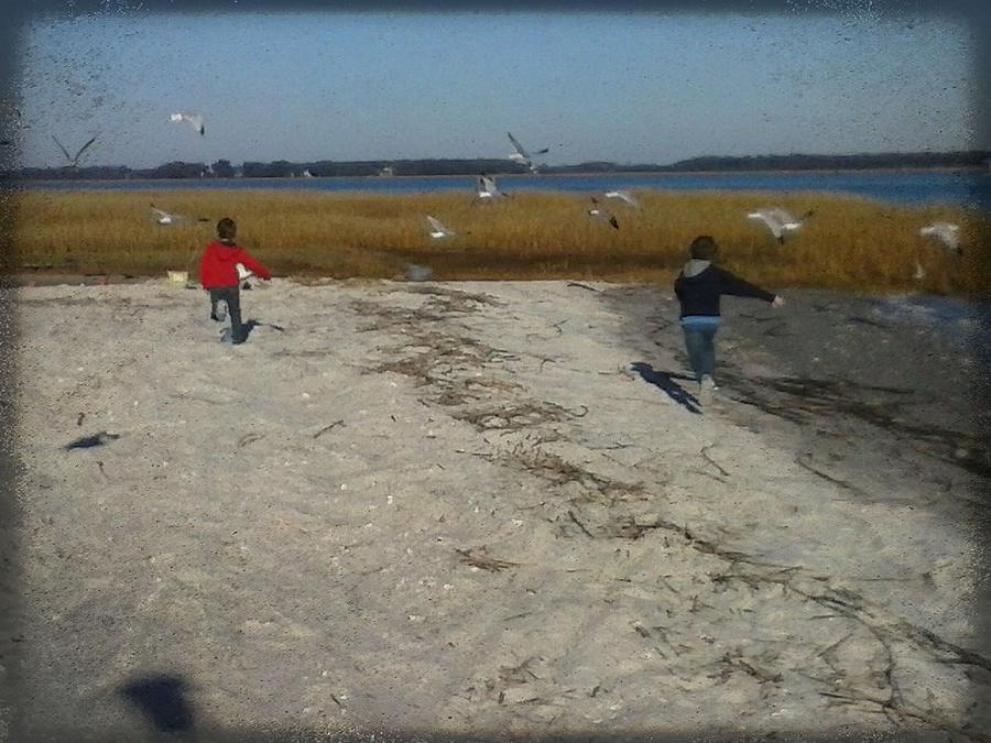 Chasing Birds Photograph by Krystal Bergeron