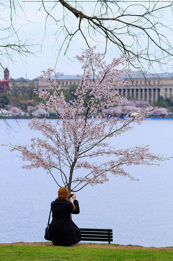 Tourist Photograph - Chasing Blossoms by Edward Kreis