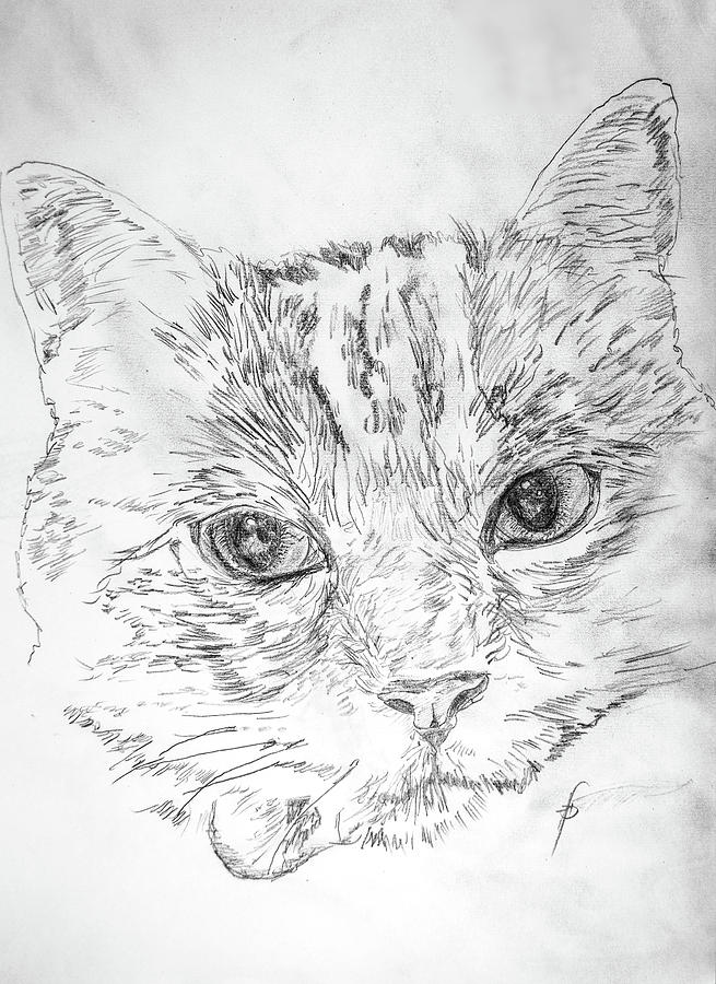 Cat Drawing - Chat Somnolant Resting Cat by George Desire Herman