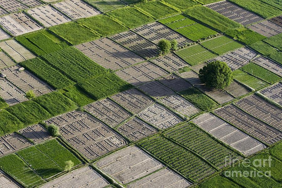 Field Photograph - Checker Board Fields by Tim Grams