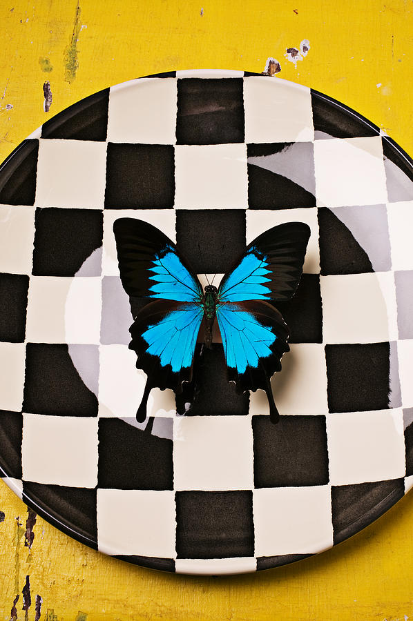 Blue Photograph - Checker Plate And Blue Butterfly by Garry Gay