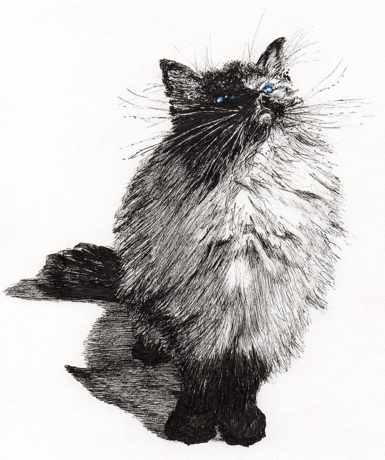 Cat Drawing - Cheekie Baby by Vincent Alexander Booth