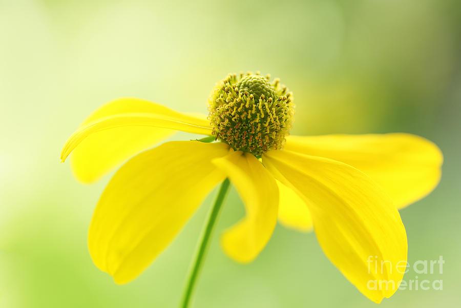 Cheerful Yellow Photograph