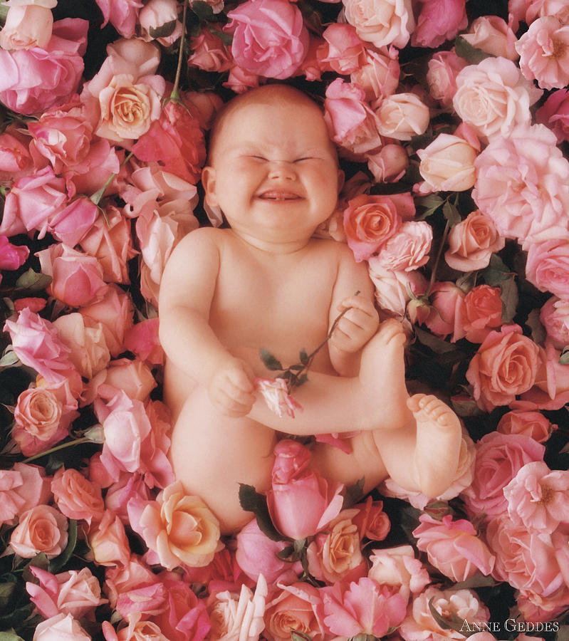 Roses Photograph - Cheesecake by Anne Geddes