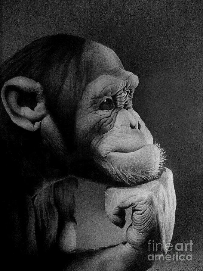 Monkey Drawing - The Thinker by Miro Gradinscak