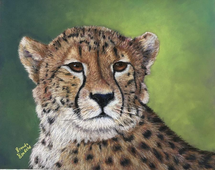 Cheetah by Brenda Bonfield