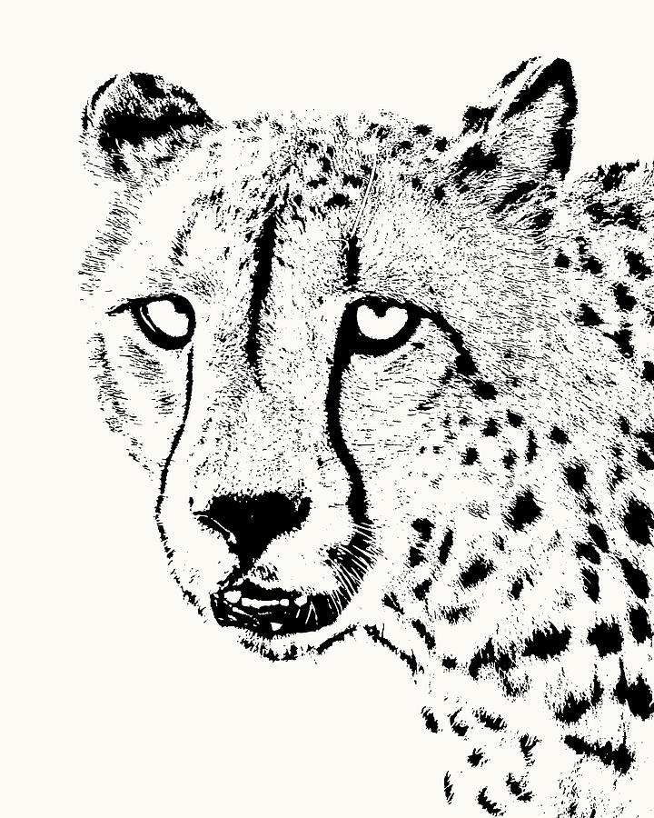 Cheetah Close-up by Scotch Macaskill