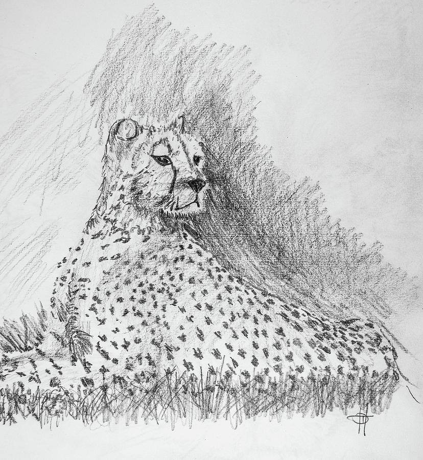 Cheetah Drawing - Cheetah by George Desire Herman