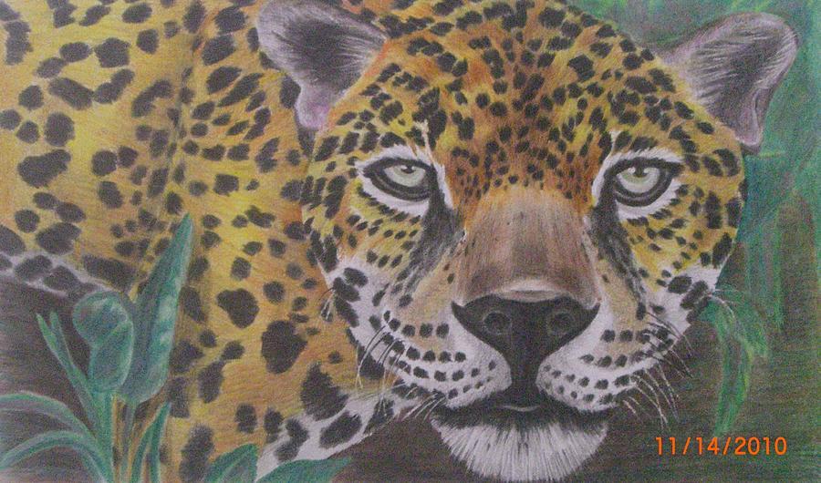 Cheetah Drawing by Gustavo Archundia