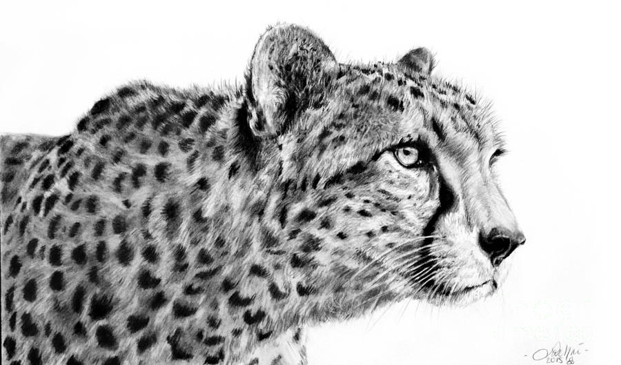 Cheetah  by Lachri
