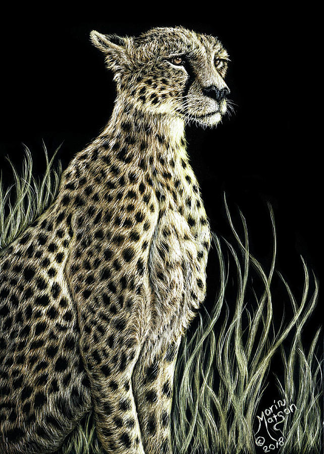 Cheetah by Monique Morin Matson