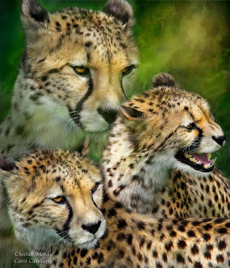 Cheetah Moods by Carol Cavalaris