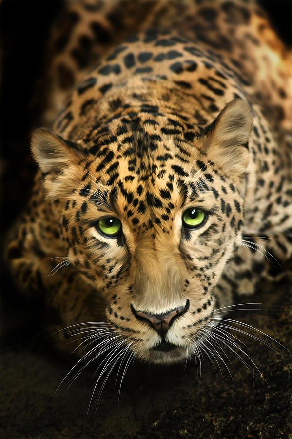 Leopard Digital Art - Cheetaro by Big Cat Rescue