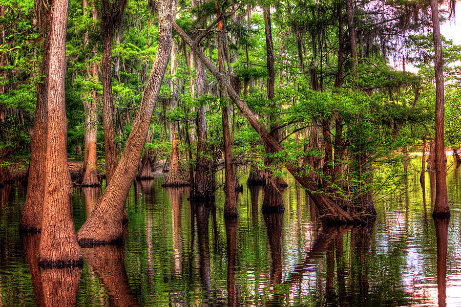 Bayou Photograph - Louisiana Cheniere Lake Bayou by Ester McGuire