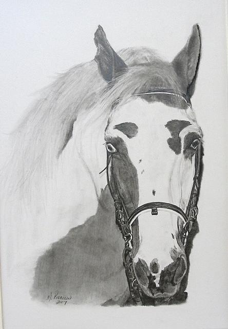 Horse Drawing - Cherokee by Marlene Piccolin