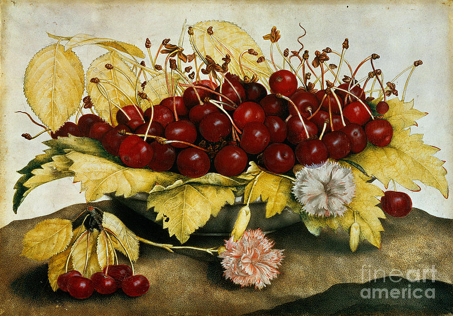 Cherries Painting - Cherries And Carnations by Giovanna Garzoni
