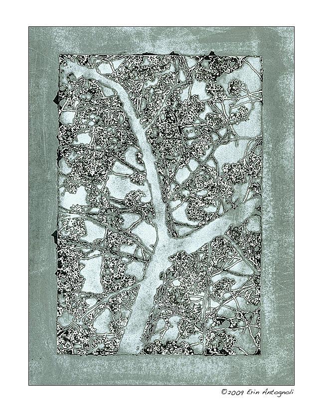 Silver Gelatin Photograph - Cherry Blossom 05 by Erin Antognoli