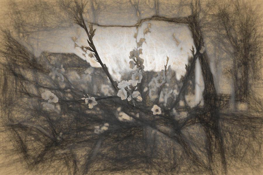 Apple Photograph - Cherry blossom impression by Adrian Bud