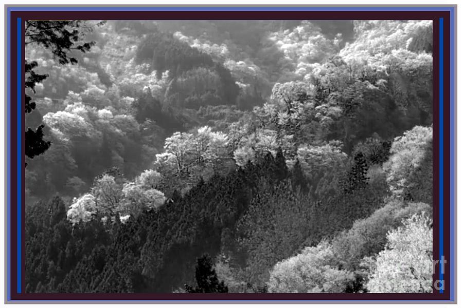 Flowers Photograph - Cherry Blossom Season In Japan Mountain Hills Trees Photography By Navinjoshi At Fineartamerica.com  by Navin Joshi