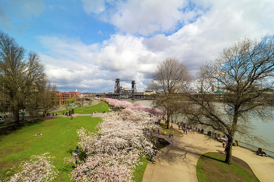 Cherry Blossom Photograph - Cherry Blossom Trees At Portland Waterfront by David Gn