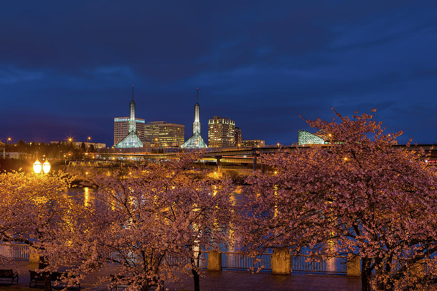 Cherry Blossom Photograph - Cherry Blossom Trees At Portland Waterfront During Blue Hour by David Gn