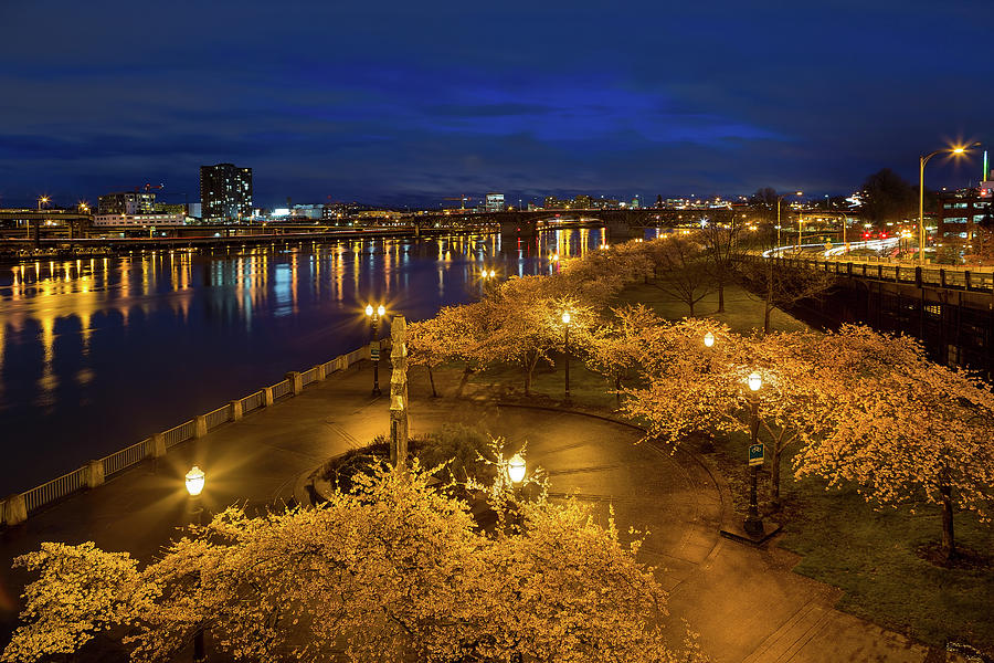 Cherry Blossom Photograph - Cherry Blossom Trees At Portland Waterfront Park During Blue Hou by David Gn