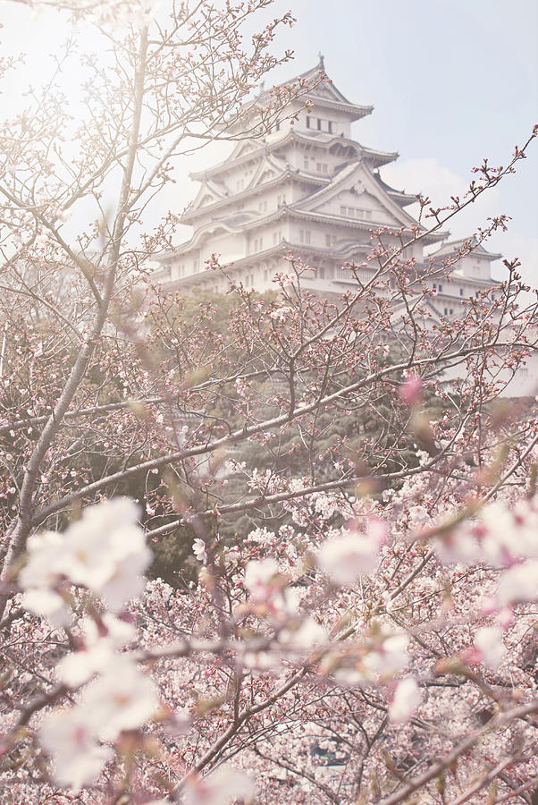 Himeji Castle Photograph - Cherry Blossoms at Himeji Castle by Margaret Goodwin