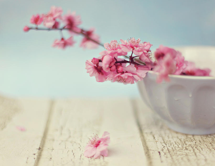 Horizontal Photograph - Cherry Blossoms In Bowl by Hayley Johnson Photography