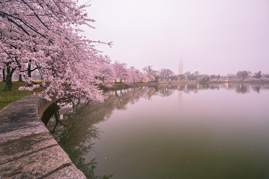 Alexandria Photograph - Cherry Blossoms In Fog by Michael Donahue