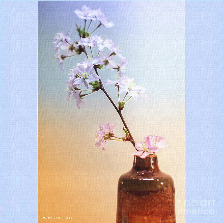 Cherry Blossoms In Vase Photograph