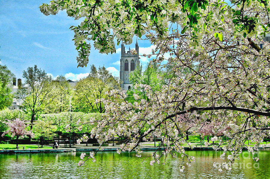 Cherry Blossoms Photograph - Cherry Blossoms by Mark Madere