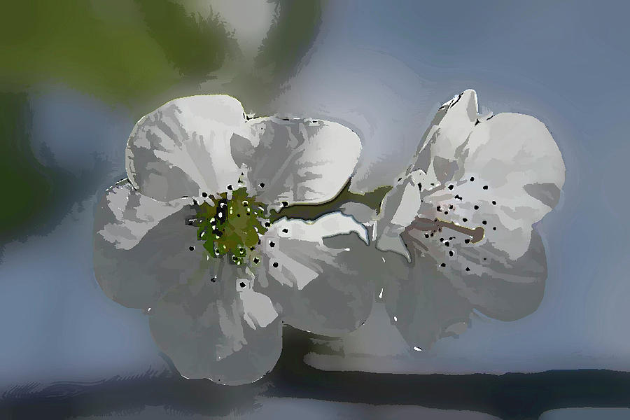 Cherry Photograph - Cherry Blossoms by Marti Buckely