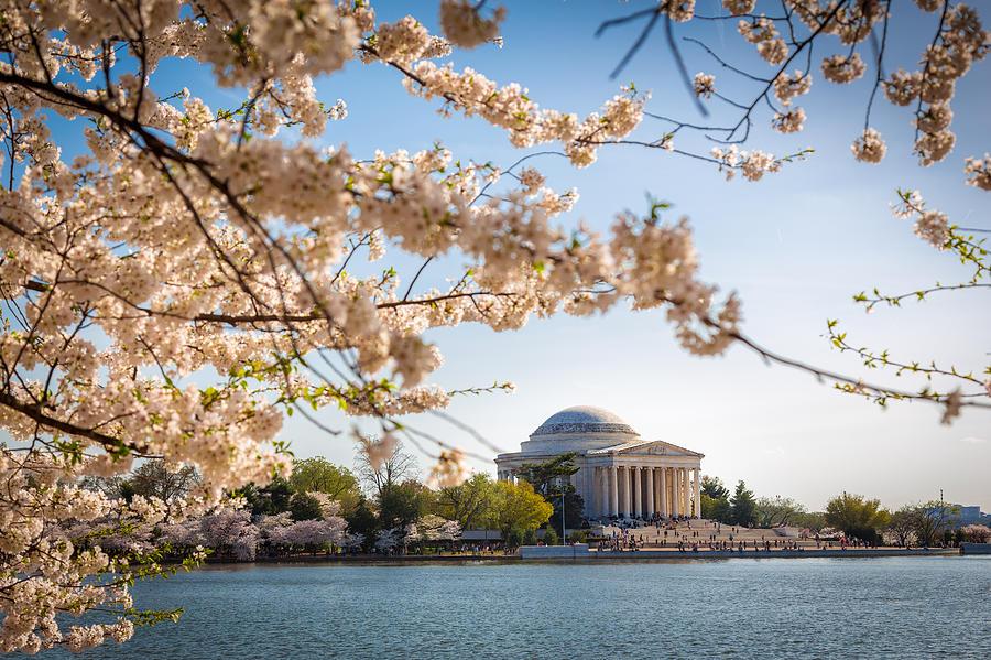 Washington Photograph - Cherry Blossoms by Robert Davis