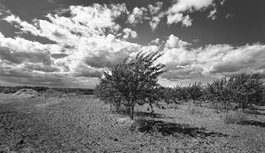 Black And White Door County Photograph - Cherry Orchard by Stephen Mack