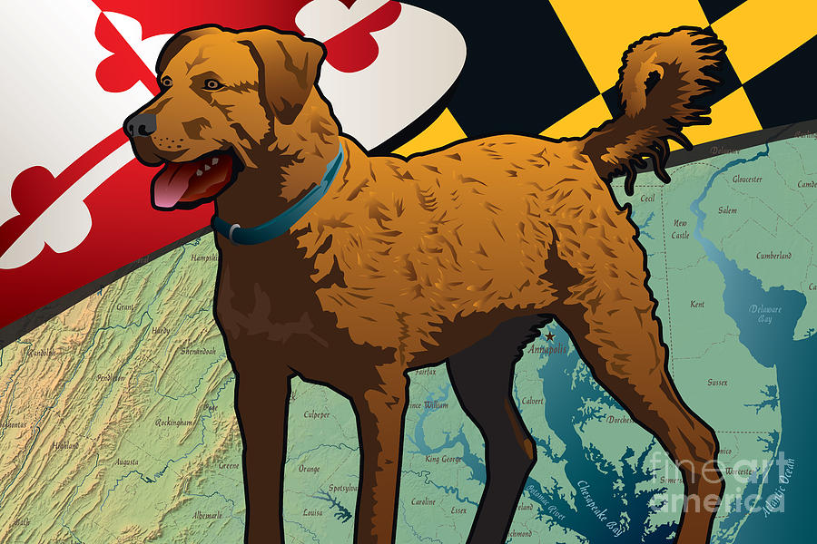 Chesapeake Bay Digital Art - Chesapeake Bay Retriever Of Maryland  by Joe Barsin