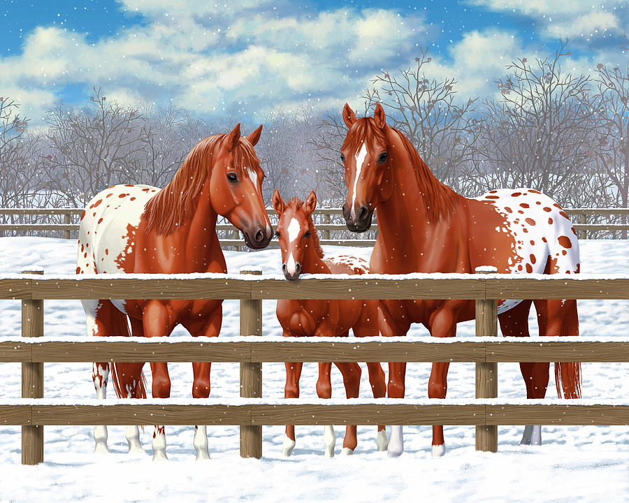 Horses Painting - Chestnut Appaloosa Horses In Snow by Crista Forest