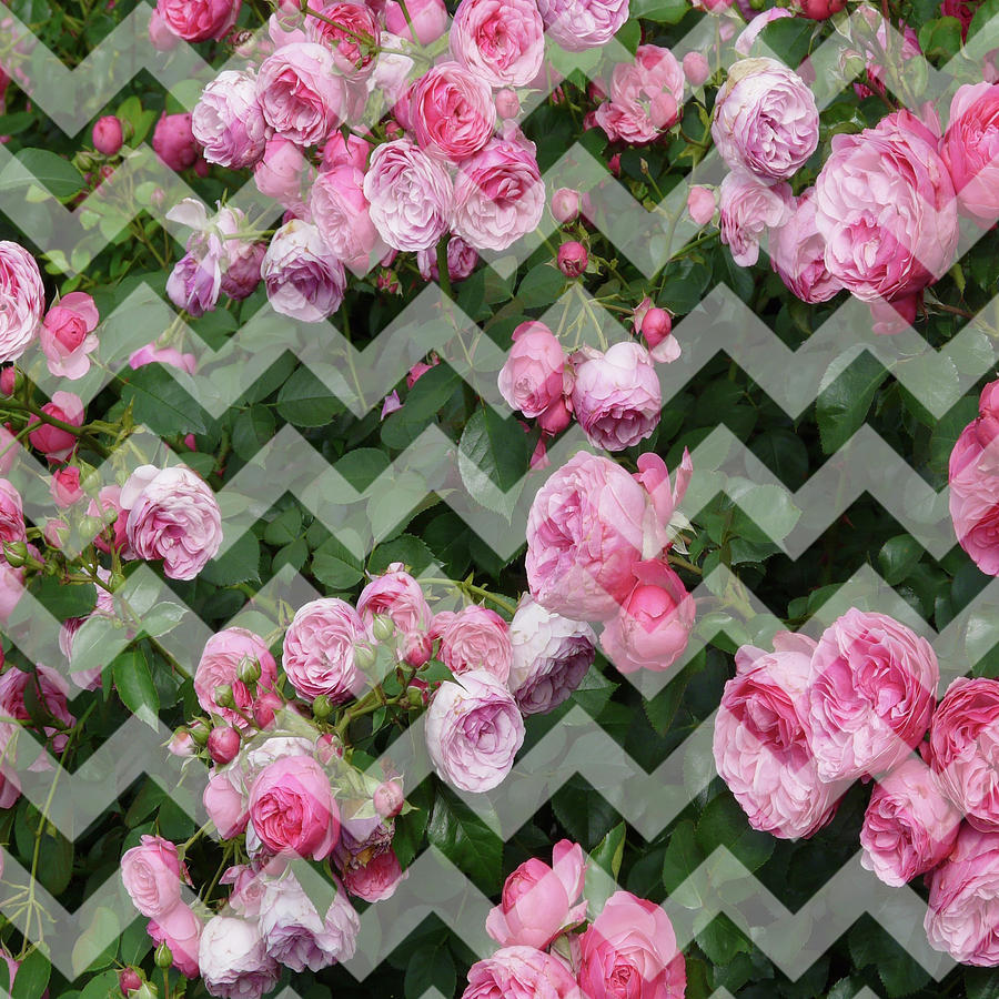 Chevron Roses Digital Art