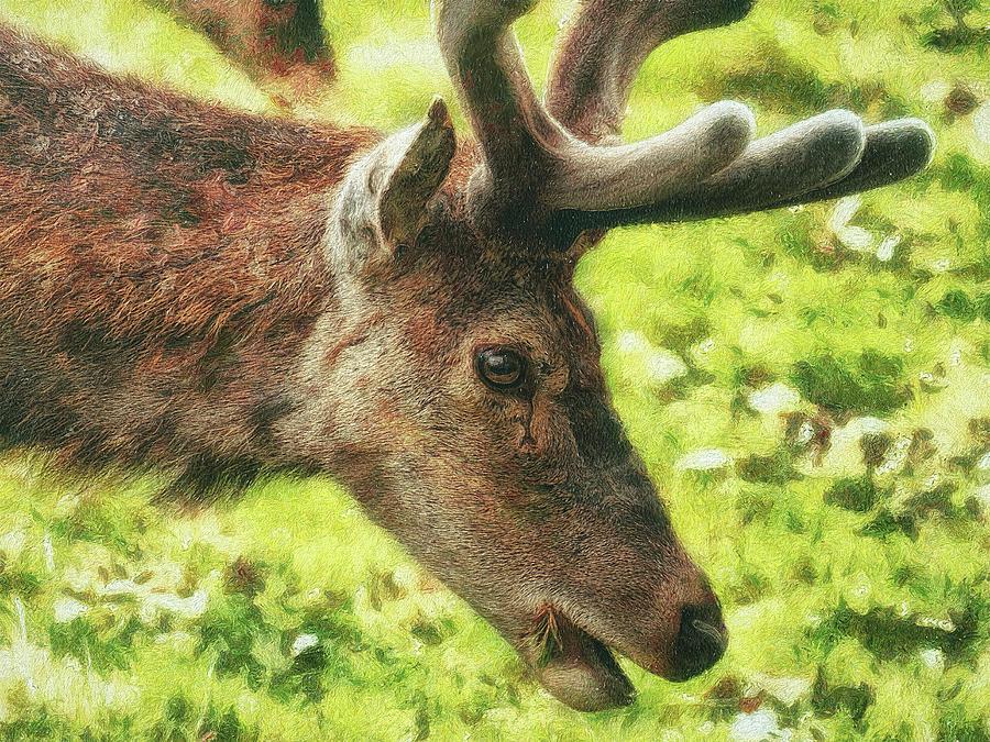 Deer Digital Art - Chewing The Cud by Leigh Kemp