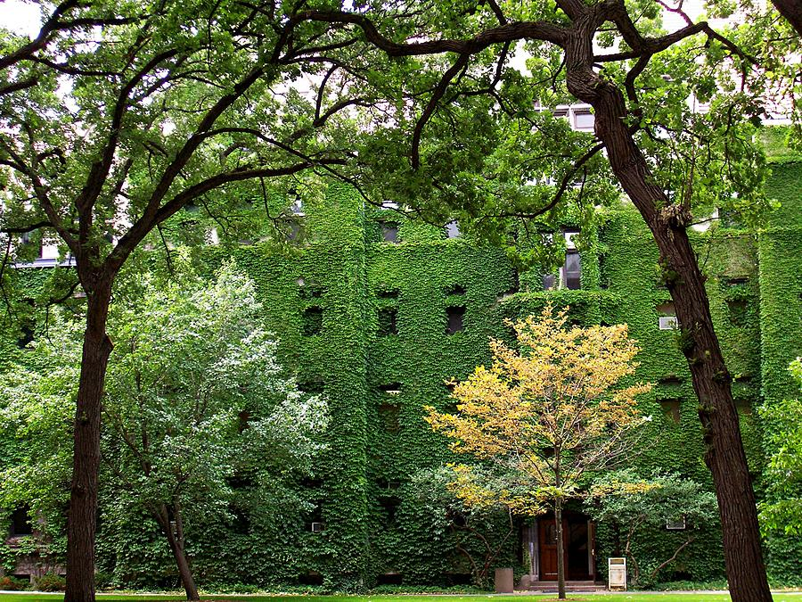 Ivy Photograph - Chicago Campus by Caroline  Urbania Naeem