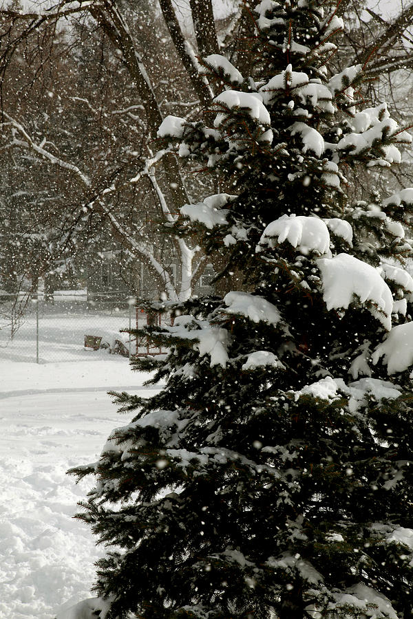 Snow Photograph - Chicago  by Joseph G Holland