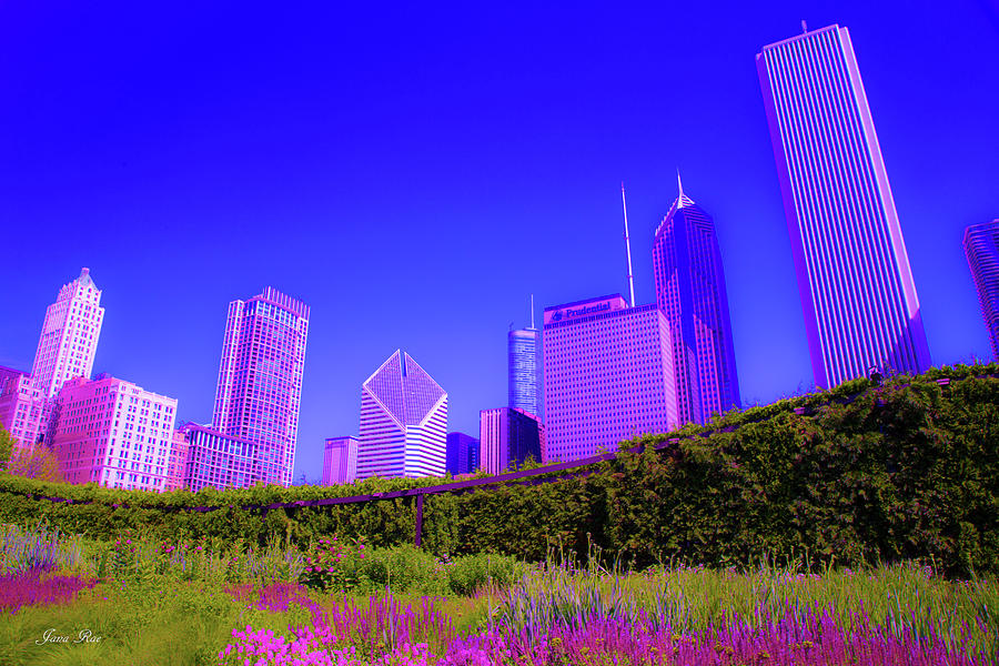 Chicago Pink and Blue by Jana Rosenkranz