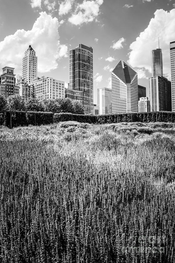 Chicago Skyline Lurie Garden Black And White Photo Photograph