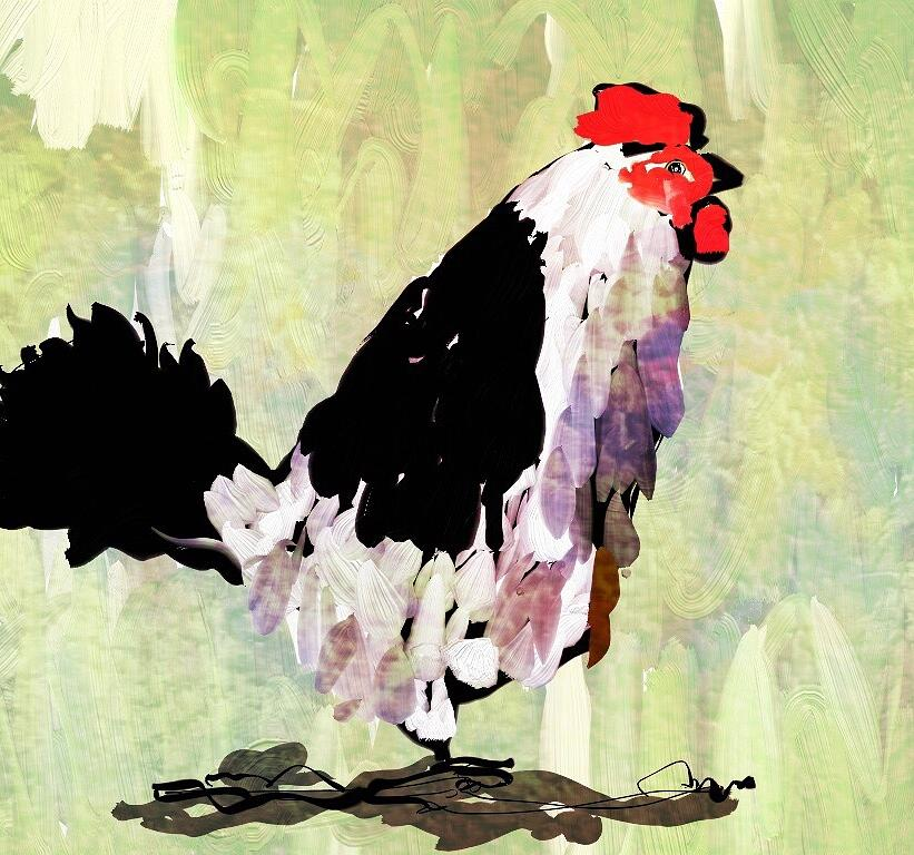 Chicken by Brett Shand